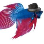 Profile picture of deathpod
